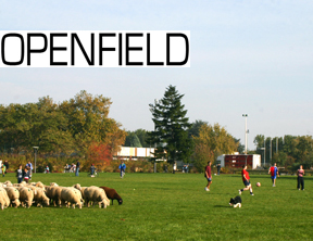 Openfield1